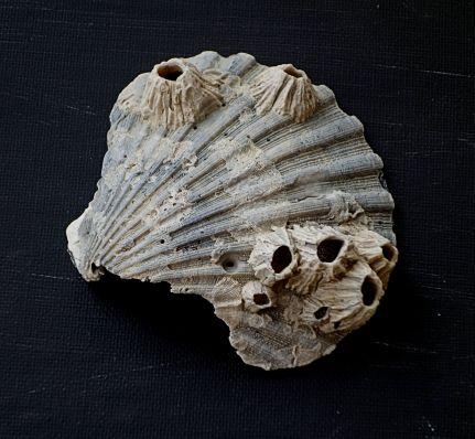2015-10 - 62 - Shells