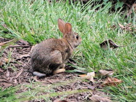 2012-07 - 05 - Rabbit