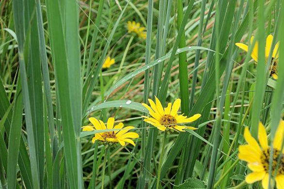 2016-08 - 38 - Wildflowers